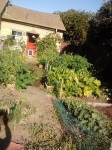 7/1/12 Garden